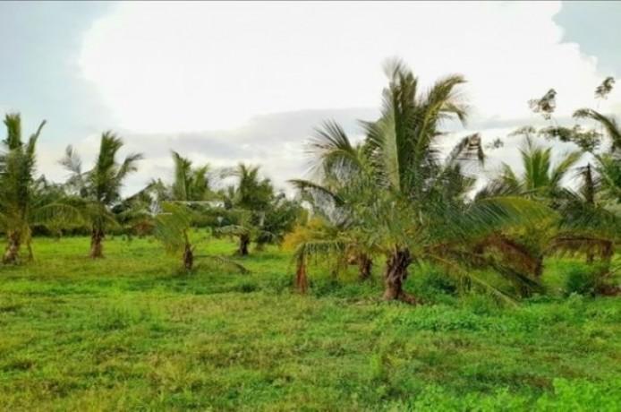 Land For Sale In Madurankuliya